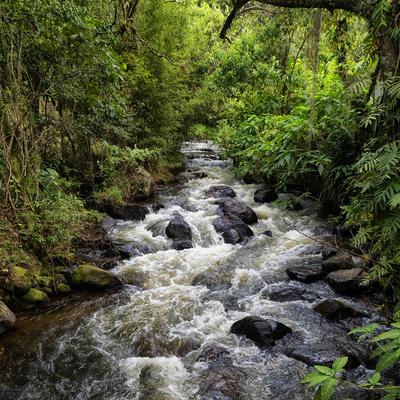 Floresta com cachoeira