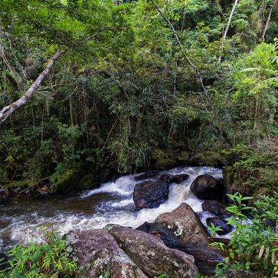 Floresta com cachoeira 2