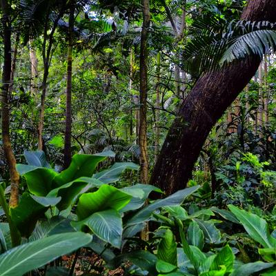 Floresta 5 - São Paulo