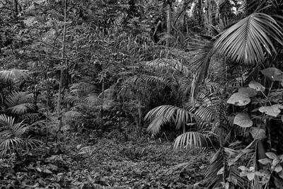 Floresta em Preto e Branco