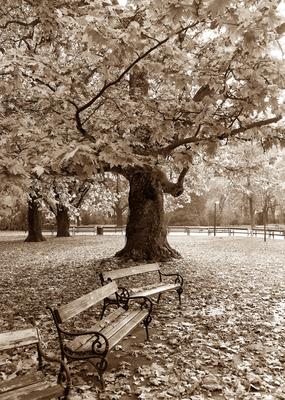 Outono em Viena - Sépia