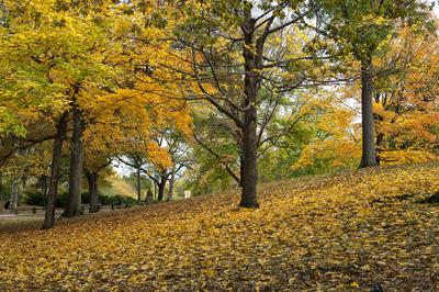 Outono no Central Park