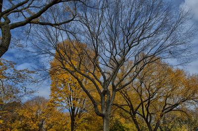 Outono no Central Park II