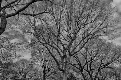 Outono no Central Park P&B