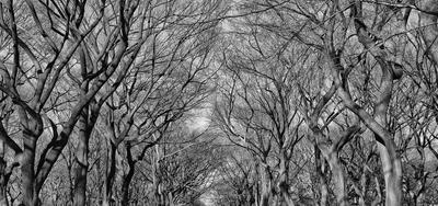 Inverno no Central Park II