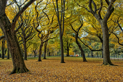 Outono no Central Park - New York