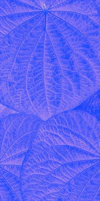 Folhas de Pariparoba I