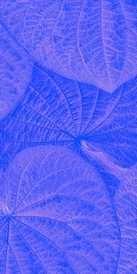 Folhas de Pariparoba II