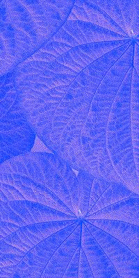 Folhas de Pariparoba III