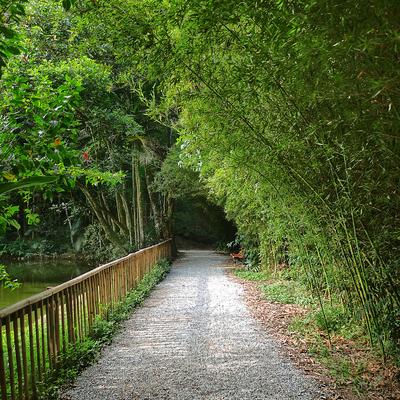 Caminhos na Floresta I