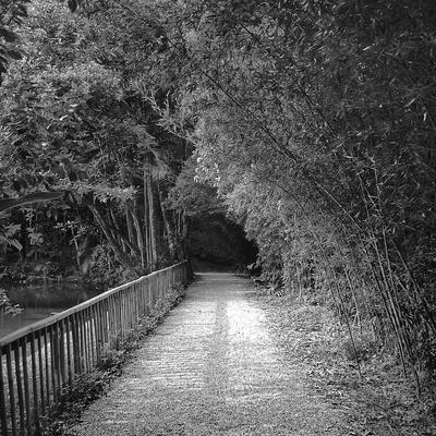 Caminhos da Floresta II