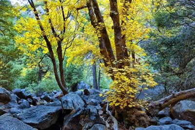 Floresta no Yosemite