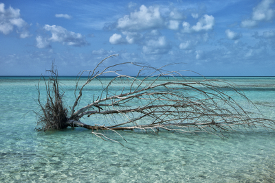 Cayo Largo VII - Cuba