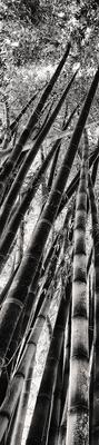 Quadro Bambú Gigante 1