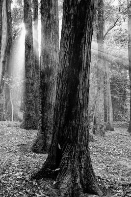 Floresta Urbanas II