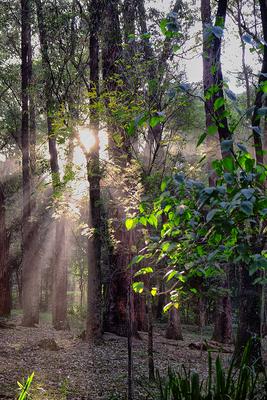 Floresta Urbanas III