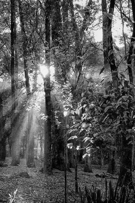 Floresta Urbanas IV