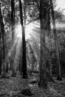 Floresta Urbanas V