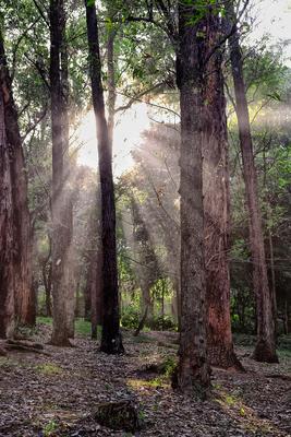 Floresta Urbanas VI
