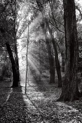 Floresta Urbanas VII