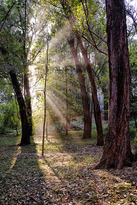 Floresta Urbanas VIII