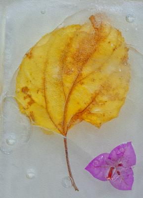 Folha congelada