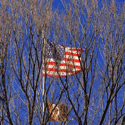 Bandeiras no Central Park - New York