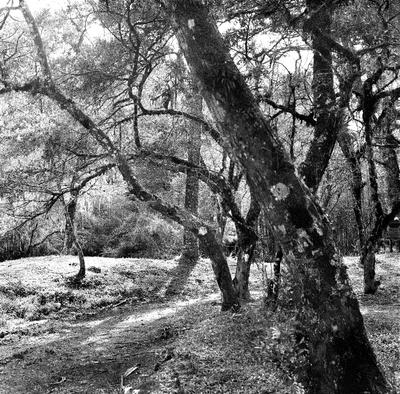 Árvore em Monte Verde