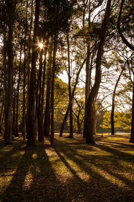 Sombras no Ibirapuera 02