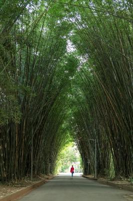 Corredor de Bambus