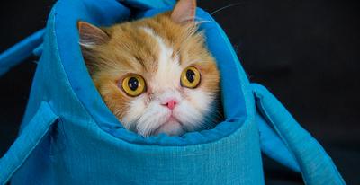 gato no cesto