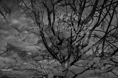 Natureza obscura