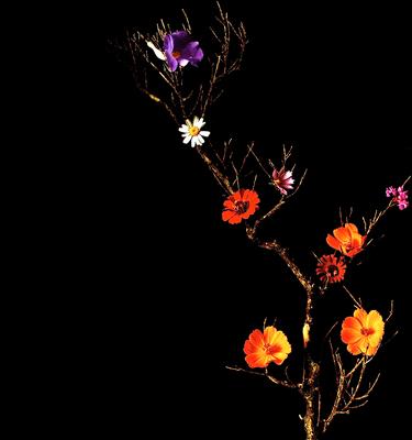 Mix Flores