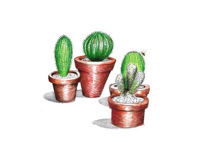 Cactus coleção