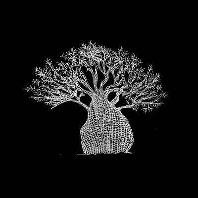 Baobá pequeno preto