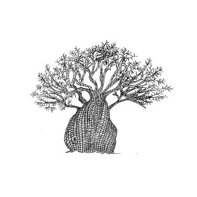 Baobá pequeno Branco