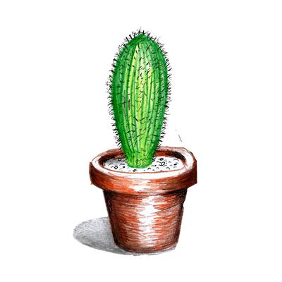 Cactus Único