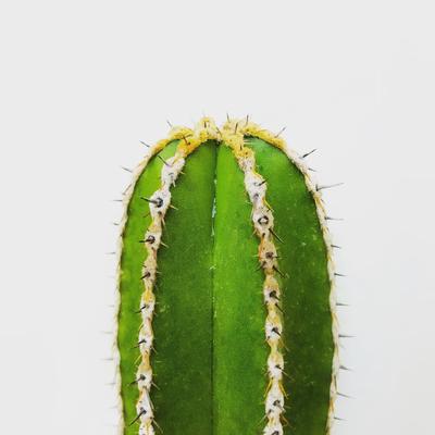Cactus quadrado 2