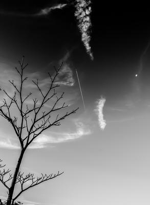 Galhos em preto e branco