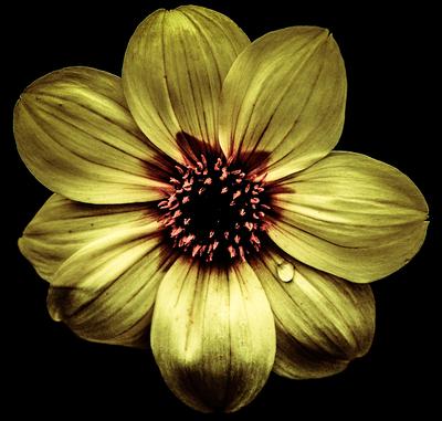 A flor amarela