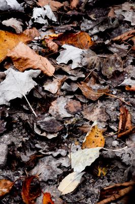 Folhas de inverno