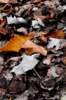 Folhas de inverno 01