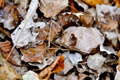 Folhas de inverno 02