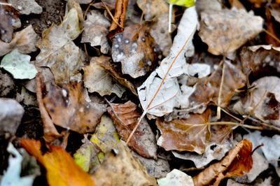 Folhas de inverno 03
