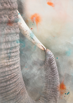 Aquarelas - Elefante