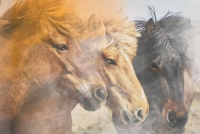 Aquarelas - Cavalos
