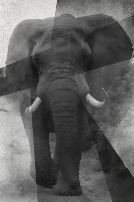 Elefante pb Aqua