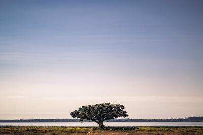 Árvore na estrada de Rio Grande do Sul