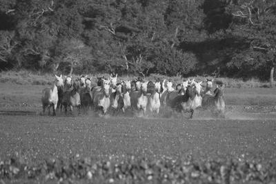 Cavalos Pantaneiros
