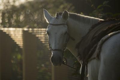 cavalo pantaneiro